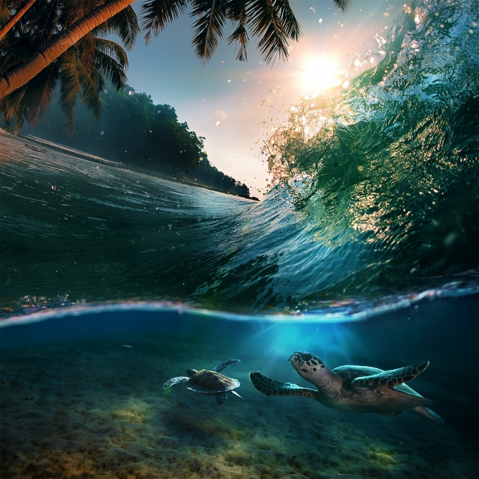 Turtles ride a wave at sunset, the Maldives.