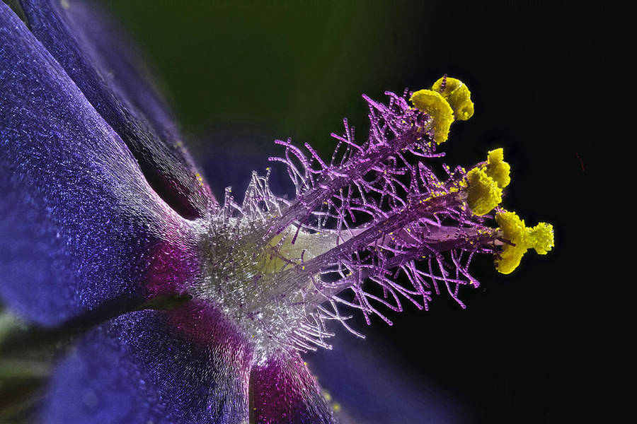 8th place / Title : Wildflower stamens / Photographer : Samuel Silberman